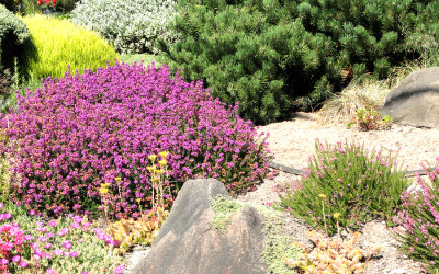 Low Maintenance Landscaping Improves Property Value
