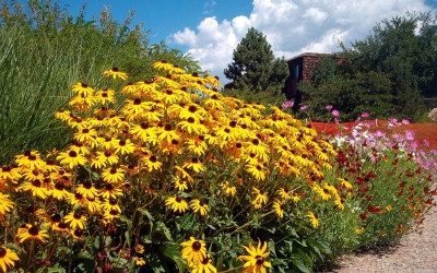 Xeriscape Allows Water Savings on Beautiful Landscapes
